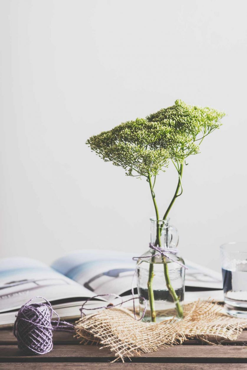 plant-beautiful