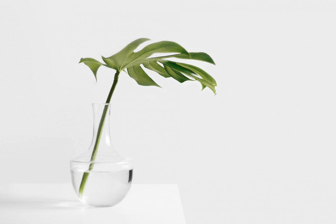 plant-watter